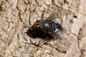 Près d'une mouche par Petr Kratochvil