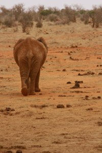 Éléphant par Anna Langova « un éléphant, ça trump énormément ! » Le nouveau président tournerait-il déjà le dos à ses promesse s(« propos de campagne ») de candidat, lesquelles, comme on le sait, n'engage que ceux qui veulent bien y croire….