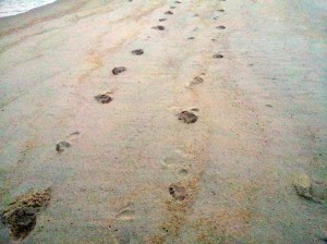 Empreinte sur la plage par mark yang