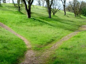http://www.publicdomainpictures.net/pictures/20000/nahled/hiking-path-599.jpg