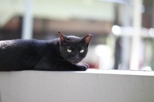 http://www.publicdomainpictures.net/pictures/50000/nahled/black-wild-cat-taking-a-nap.jpg Vous regardez attentivement ce chat noir : vous pensez à quoi ?