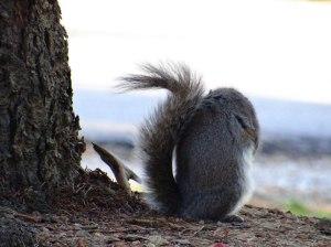 http://www.publicdomainpictures.net/pictures/30000/nahled/not-listening.jpg Vers qui te repositionneras-tu ?