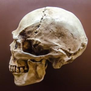 """""""Mourir(ou ne pas mourir)un jour, telle est la question !"""" Serez-vous assez """"crâne"""" pour vous la poser ?"""