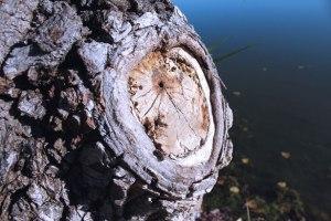"""Certains succès du FN aux municipales : """"l'arbre qui cache la forêt"""" ?"""