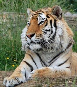 Le Tigre magazine : curieux magazine curieux...