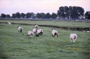 Si vous n'êtes pas des veaux ou des moutons, fuyez !